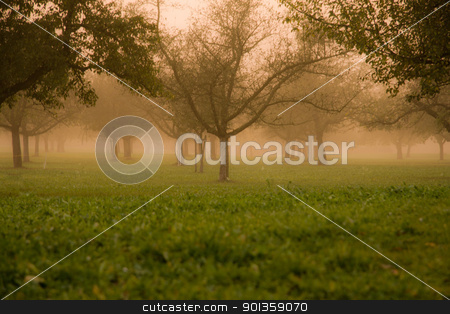 MISTY FOREST stock photo, Misty Orchard In The Late Afternoon Sun by 35millimetre