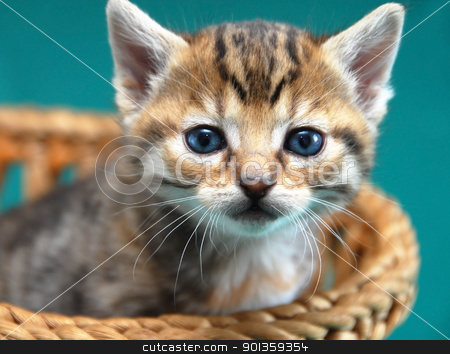 Adorable kitty portrait stock photo, adorable baby cat in basket over green background by Julija Sapic