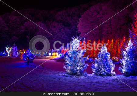 Christmas fantasy - pine trees in x-mas lights stock photo, christmas fantasy - pine trees in x-mas lights, Cazma, Croatia by xbrchx