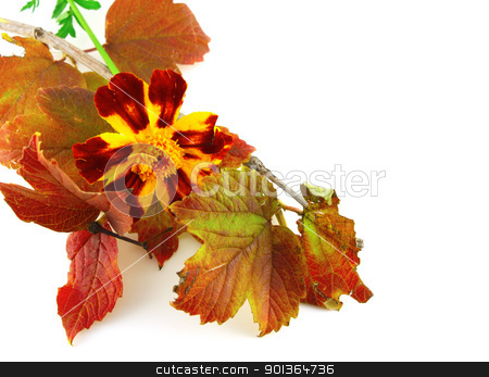 Twig with autumn leaves and beautiful flower stock photo, Twig with autumn leaves and beautiful flower by Sergei Devyatkin