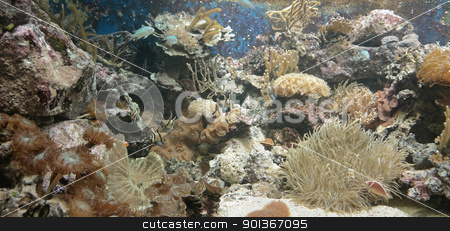 Coral reef stock photo, underwater scenery showing a colorful coral reef detail with various animal species by prill