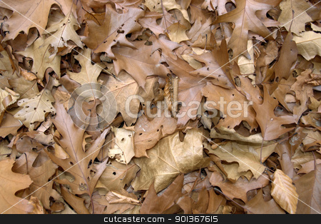 sere brown autumn leaves stock photo, natural background with brown sere autumn leaves by prill