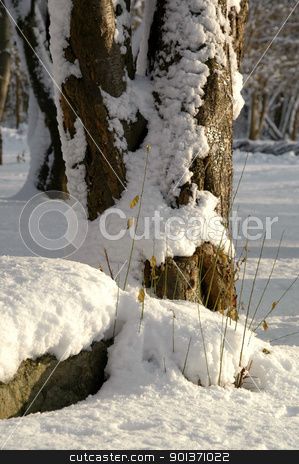 Winter stock photo, Snow and ice on tree by Lars Christensen