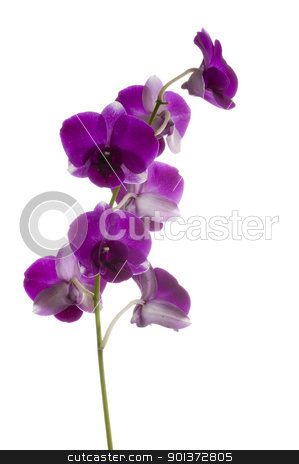 Orchid stock photo, Orchid flower by p.studio66