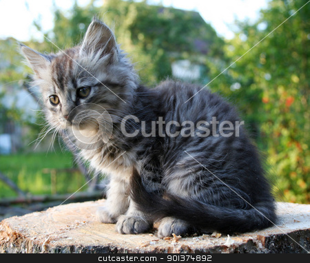 kitten stock photo, nice kitten by orson