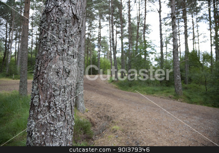 Forest path stock photo, Path in a forest with focus on mossy tree. by pawelkowalczyk