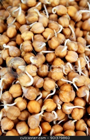 Garbanzo Sprouts stock photo, Light brown food background of barbanzo sprouts by Henrik Lehnerer