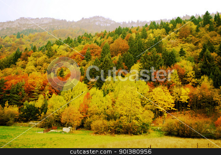 Forest stock photo, Forest in autumn  by freeteo