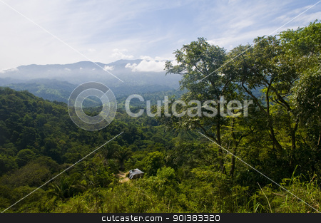 Jungle  stock photo, View over Colombian rain forest in