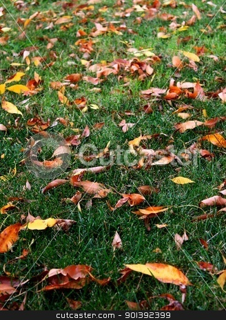 Grass Leaves Autumn stock photo, Green grass with a blanked of orange autumn leafs by Henrik Lehnerer