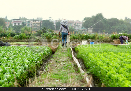 farmer working in cultivated land stock photo, farmer working in cultivated land by Keng po Leung