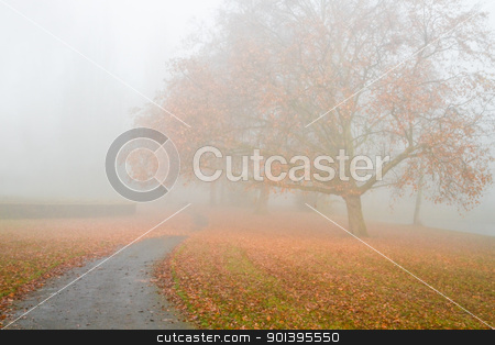 Big Plane tree with fallen leaves in the mist stock photo, Dense fog in fall - Big Plane tree with fallen leaves in the mist on cold November day by Colette Planken-Kooij
