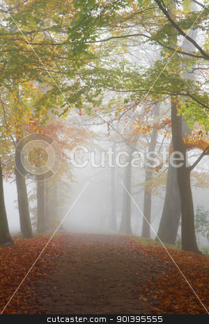 Path with beechtrees in dense fog stock photo, Mist in fall - Path with beechtrees in dense fog on cold November day by Colette Planken-Kooij