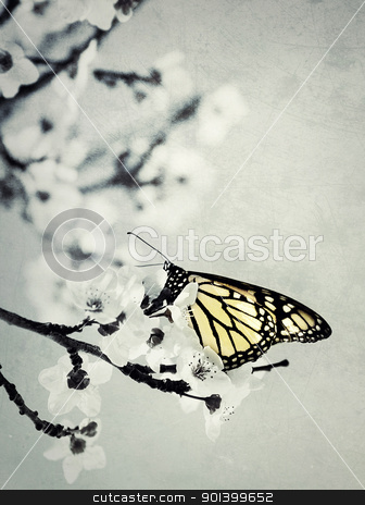 butterfly stock photo, butterfly by klenova