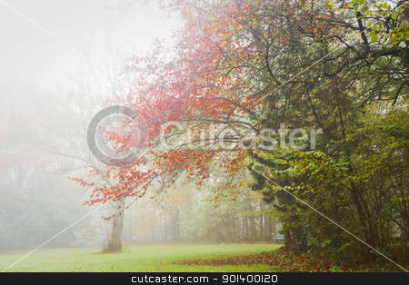 Autumn - Colorful trees in the mist  stock photo, Fog in November - Colorful trees in the mist in fall by Colette Planken-Kooij