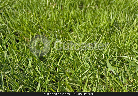 Green lawn stock photo, Green grass on the lawn (texture) by rezkrr