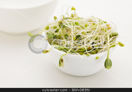 sprout mix in white bowl stock photo, mix of sunflower, snow pea, clover, radish and onion sprouts in a white bowl by Marek Uliasz