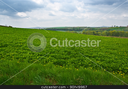 Field stock photo, Green field by vtorous