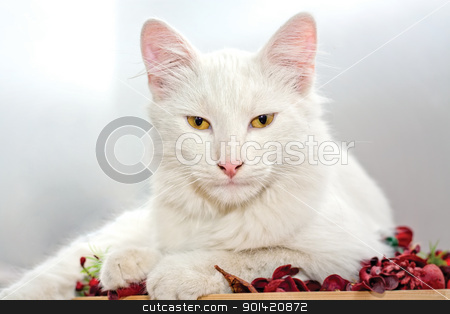 White Cat stock photo, This image represents a cute white cat. by Bagiuiani Kostas