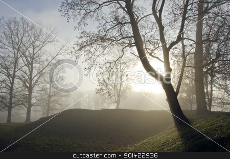 Old lime tree valley sunken in dense fog. stock photo, Forest valley fragment. Old lime tree sunken in dense fog. by sauletas
