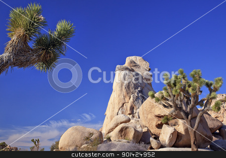 Rock Yucca  Brevifolia Mojave Desert Joshua Tree National Park C stock photo, Rock Joshua Tree Big Rocks Yucca Brevifolia Mojave Desert Joshua Tree National Park California Named by the Mormon Settlers for Joshua in the Bible because the branches look like outstretched hands by William Perry