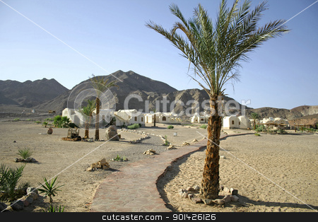 palm trees on beach resort stock photo, palm trees on beach resort, red sea sinai, egypt by Paul Prescott