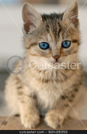 Little kitten stock photo, little mixed-bred baby cat with blue eye by Julija Sapic