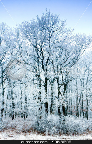 Forest stock photo, Frozen forest on a very cold day by ARPAD RADOCZY