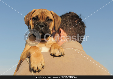 puppy Bull Mastiff stock photo, a man holding on his shoulder his puppy Bull Mastiff by Bonzami Emmanuelle