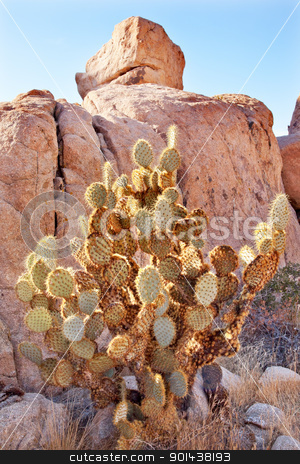 Prickly Pear Cactus Hidden Valley Mojave Desert Joshua Tree Nati stock photo, Prickly Pear Cactus Hidden Valley Mojave Desert Joshua Tree National Park California by William Perry