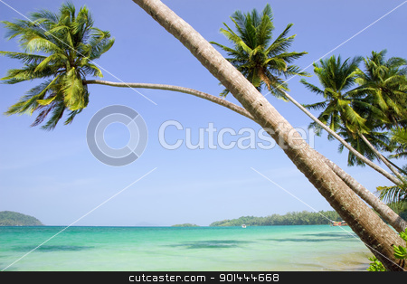 Tropical Scenery stock photo, Tropical scenery, palm trees leaning over the ocean in Thailand by Rognar