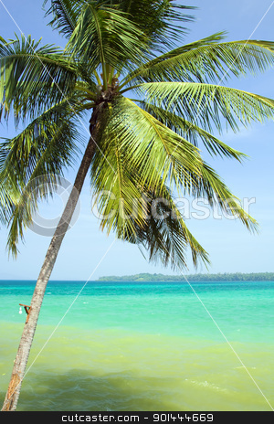 Palm Tree and the Sea stock photo, Tropical scenery, palm tree leaning over turquoise water in Thailand by Rognar