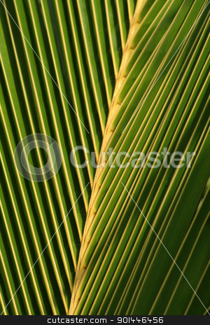 Palm Leaf Closeup stock photo, A closeup of a palm tree leaf. by Chris Hill