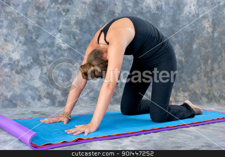 woman doing Yoga posture Marjaryasana or cat pose  stock photo, Young woman on yoga mat in  Yoga posture Marjaryasana or cat pose against a grey mottled background . by Stephen Orsillo
