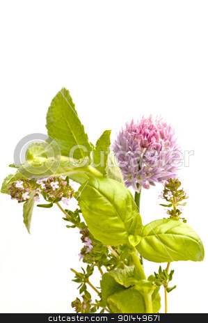 herbs stock photo, herbs by Hans-Joachim Schneider