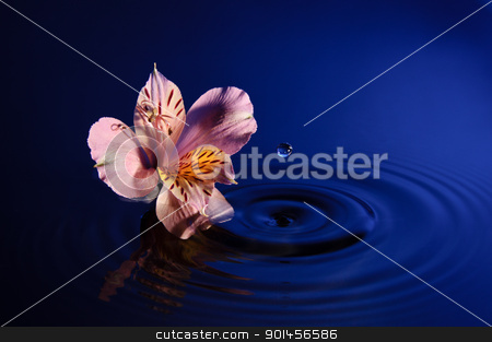 Flower with Drop stock photo, Flower with Droplet of water suspended in air above water surface by Riaan Roux