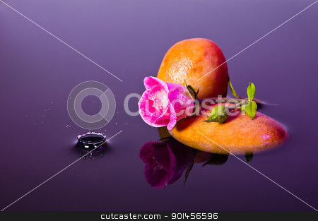 Pink Rose - Water Splash-04852 stock photo, Pink Rose - Water Splash-04852 by Riaan Roux
