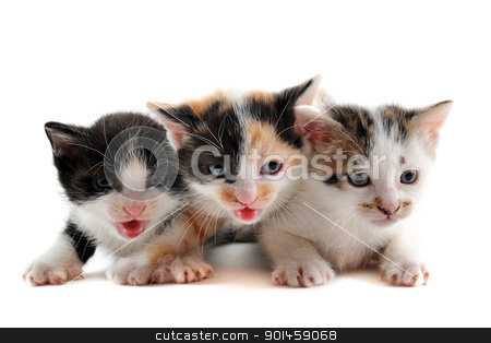 three kitten stock photo, three cute kitten in front of white background by Bonzami Emmanuelle