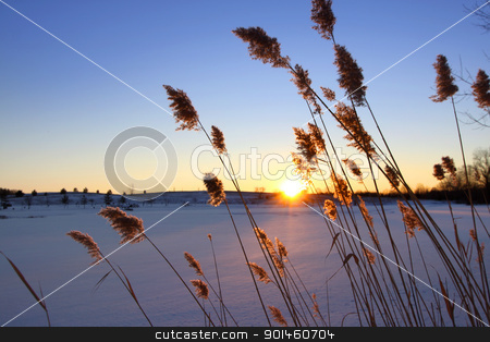 Winter sun set stock photo, Tall grass by the frozen lake with sun set by Sreedhar Yedlapati