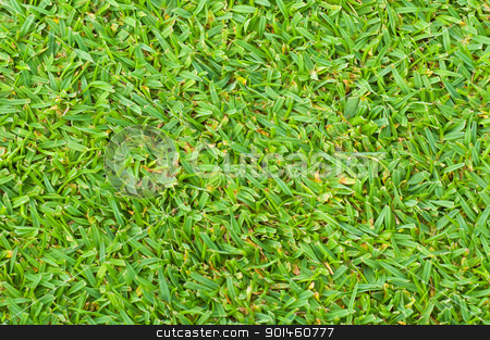 green grass stock photo, green grass background by Komkrit Muangchan