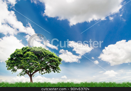green field  stock photo, green field under the blue sky by Komkrit Muangchan
