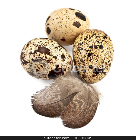 Eggs quail stock photo, Three quail eggs spotted, two feathers isolated on white background by rezkrr