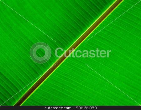 banana leaf stock photo, young green banana leaf take from bottom view by Yuttasak Jannarong