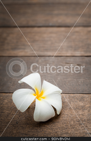 white flower stock photo, white tropical flower on old wood pattern by Yuttasak Jannarong
