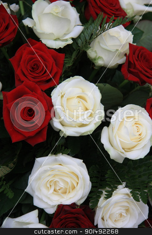 big white and red rose flower arrangement stock photo, big red and white roses in a flower arrangement by Porto Sabbia