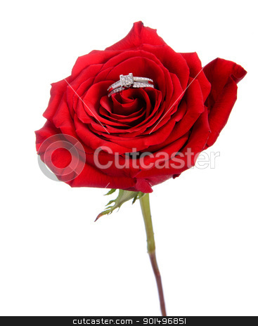 Diamond Ring in Rose stock photo, A diamond engagement ring resting in a red rose, isolated against a white background. by Richard Nelson