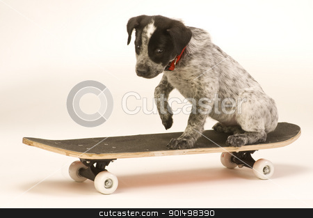 Surfboard Dog stock photo, Dog on skateboard. by WScott