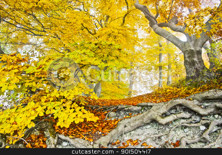 yellow autumn forest stock photo, An image of a beautiful yellow autumn forest by Markus Gann