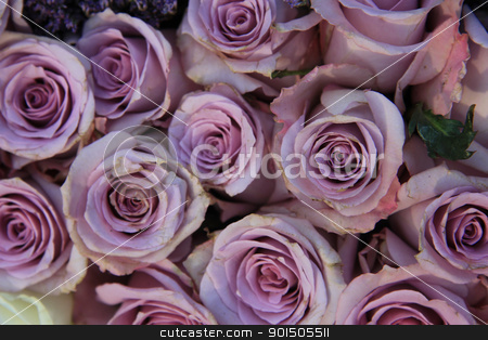 Lilac roes in close up stock photo, Group of big lilac roses in close up, perfect as a background by Porto Sabbia