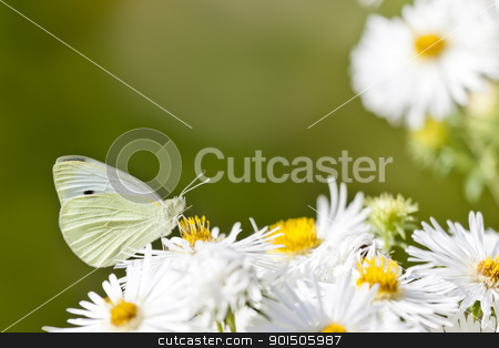 butterfly stock photo, An image of a nice white butterfly by Markus Gann